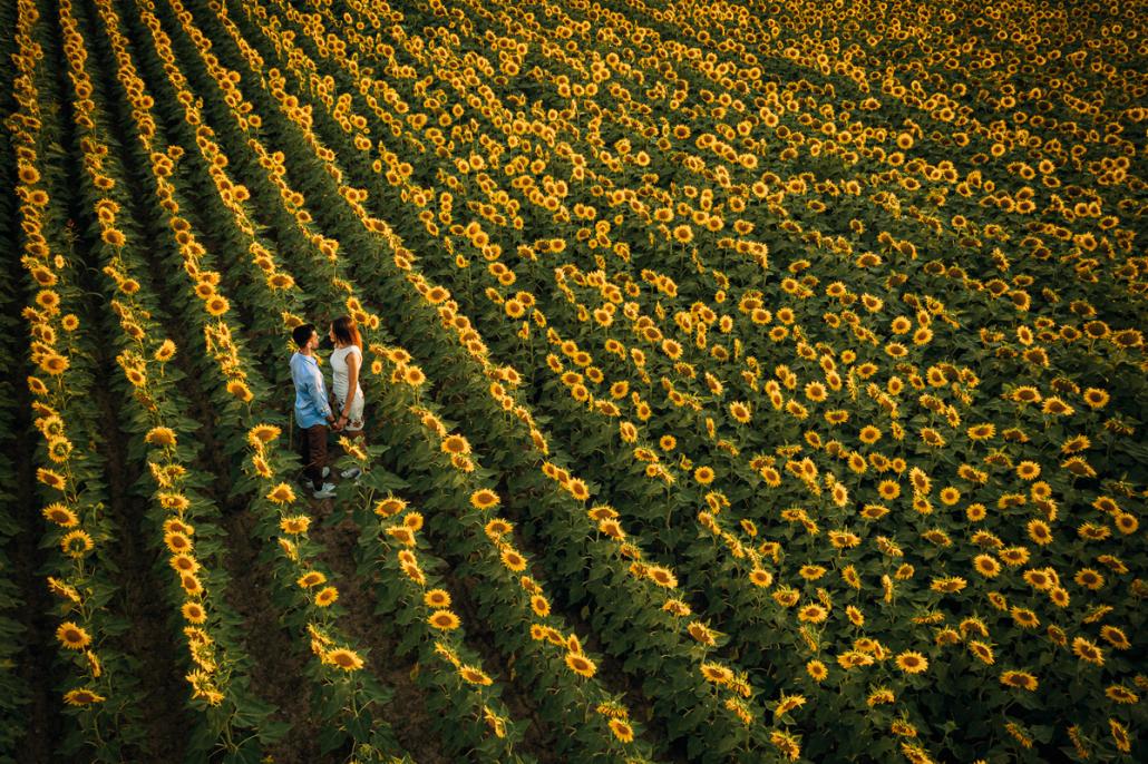 servizio fotografico di coppia a Cologna Veneta - coppia nel campo di girasoli