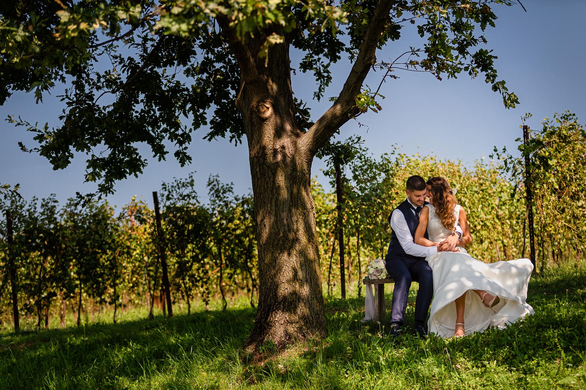 video matrimonio - sposi seduti vicino ad un albero