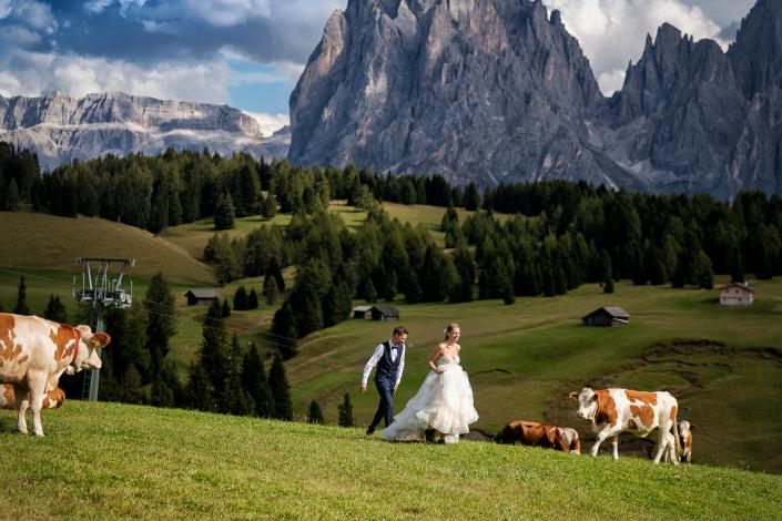 Trash the dress in Alpe di Siusi - sposi corrono tra le mucche